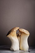 Close up of three king oyster mushrooms