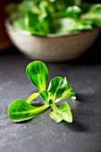 Feldsalat in Schüssel und davor