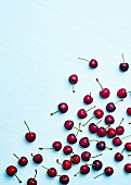 Dark cherries on a light blue background