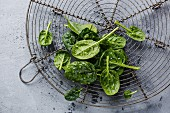 Raw fresh baby spinach on wire rack on gray concrete background