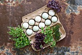 Eggs and cress in an egg box