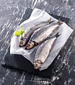Three fresh herrings on paper with parsley