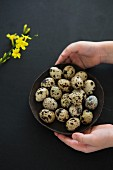 Hands holding a bowl of quail eggs
