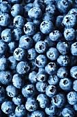 Blueberries (full frame)