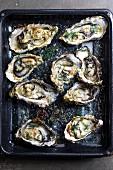 Gebackene Austern mit Parmesan und Dill