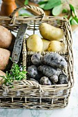 Various types of potato in a basket