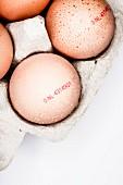 Braune Eier mit Herkunftsstempel in Eierkarton (Aufsicht, Nahaufnahme)
