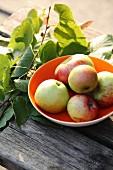 Frische Äpfel in Schüssel auf Holztisch