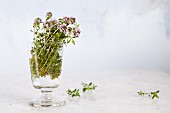 Fresh flowering summer savory in a glass jar against a white background