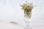 Fresh thyme in a glass jar against a white background