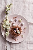 Branch of blossom and Easter nest of chocolate eggs on plate