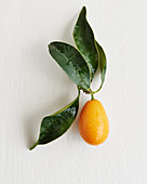 A kumquat with leaves on a white surface