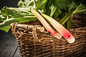 Two freshly harvested rhubarb sticks in a wicker basket