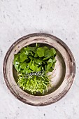Fresh portulak in a bowl