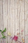 Sprouts and salad leaves on a wooden background