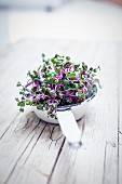 Purple cress in a bowl