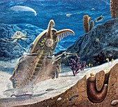 Burgess Shale animals, illustration