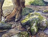 Iguanadon dinosaur footprints, illustration