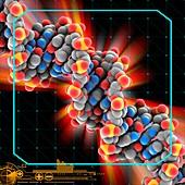 Yeast DNA molecule