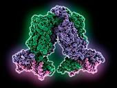 Lac repressor molecule complex