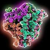 Human beta-amyloid fibril molecule