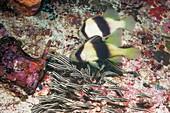 Soapfish and catfish feeding