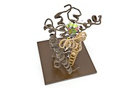 THC antagonist and CB1 receptor, molecular model