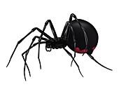 Black widow spider, illustration