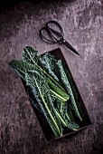 Kale in a metal tray with scissors