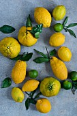 Lemons, limes and ugli fruit