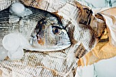 Dorade with ice cubes on newspaper