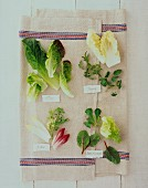 Various types of lettuce on a linen cloth