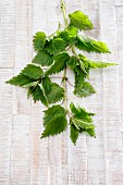 Fresh nettle leaves on a wooden background