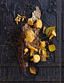 Chanterelles, leaves and twigs