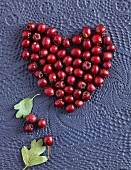 White thorn berries in a heart shape