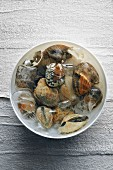 Fresh mussels with ice cubes in a bowl (top view)