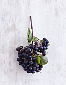 Aronia berries on a white wooden background