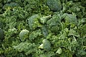 Kale and broccoli