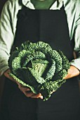 Man wearing black apron keeping fresh green cabbagein in his hands at local farmers market