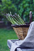 Fresh green asparagus in a wicker basket on a table outdoors