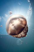 Jellyfish and sunbeams