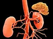 Kidneys CT scan