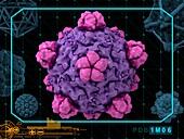 Bacteriophage alpha3 virion