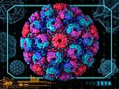 Simian virus 40
