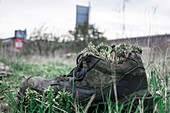 Old boot sprouting weeds