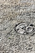 The ammonite slab, Digne les Bains.