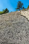 The ammonite slab, Digne les Bains