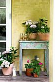 Hortensien und Geranien auf und neben einem alten Holztisch