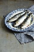 Three sardines on a plate