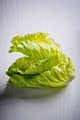 Stacked Cabbage Leaves